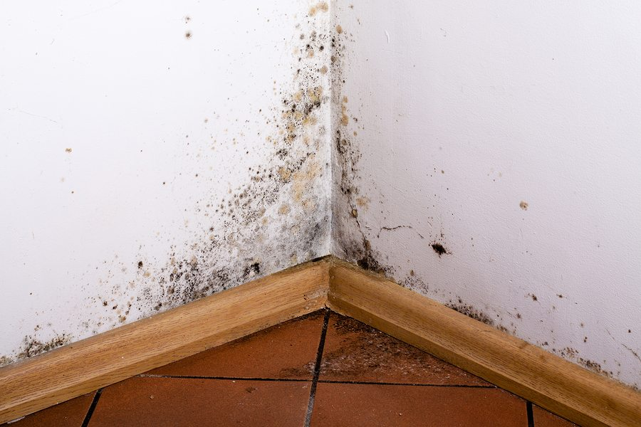 Home Health Care in Modesto CA: Mold Awareness Month